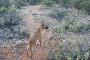 Oscar spots a kangaroo