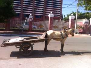 Horse and Tray