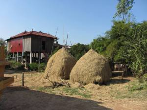 Dr Zeuss style haystacks decorate many front yards in villages around Kampong Cham