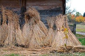 Sheaves of wheat