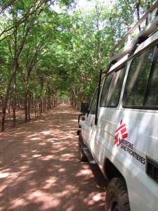 Rubber trees lining country lanes in Kampong Cham