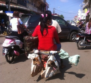 Pillion passenger dogs on a moto, Kampong Cham Central Market