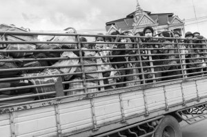Migrant workers being transported home after returning from Thailand after the military coup.