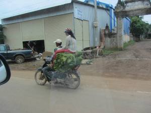 One of the many ways to transport rice seedlings