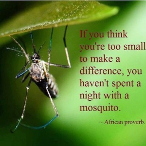 African-proverb-sleep-with-mosquito